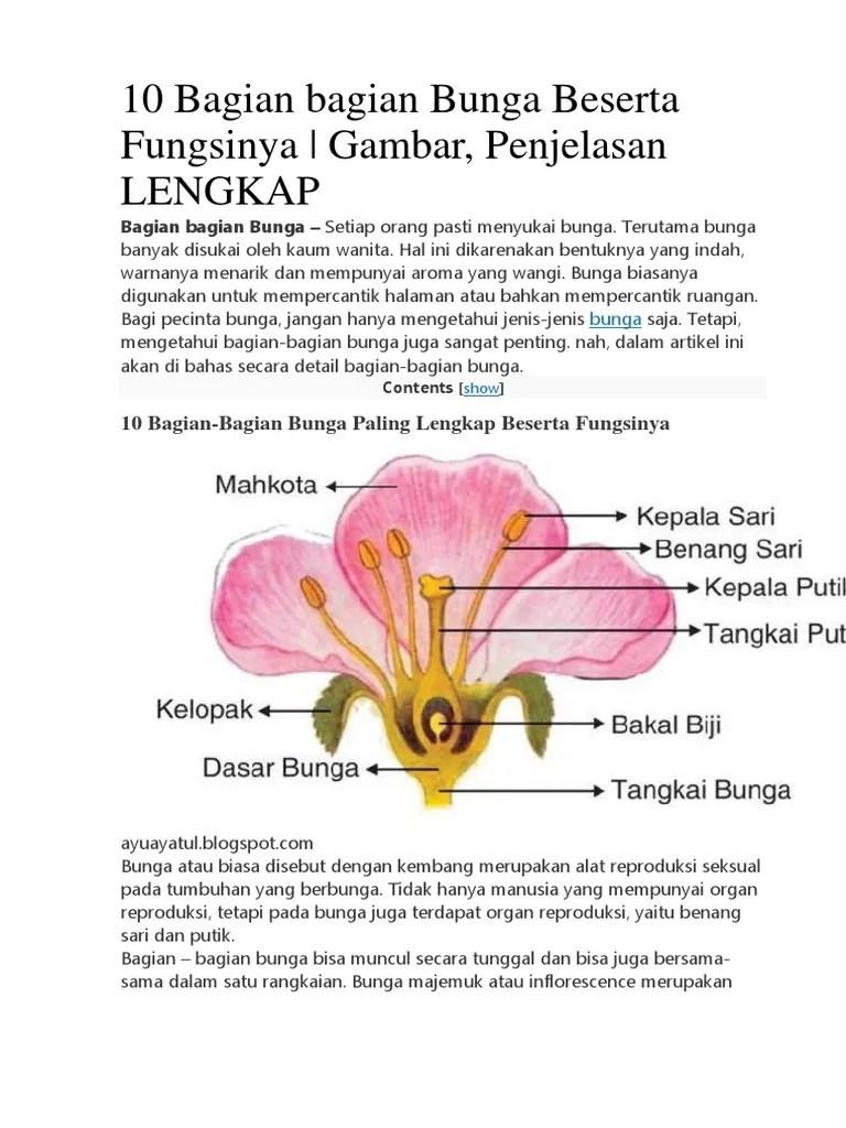 Gambar Bagian Bunga Dan Fungsinya : gambar, bagian, bunga, fungsinya, Bagian, Bunga, Beserta, Fungsinya