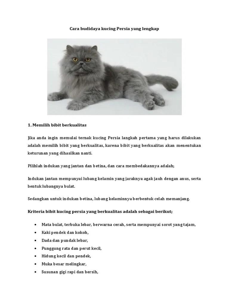 Cara Membedakan Kucing Jantan Dan Betina : membedakan, kucing, jantan, betina, Budidaya, Kucing, Persia, Lengkap