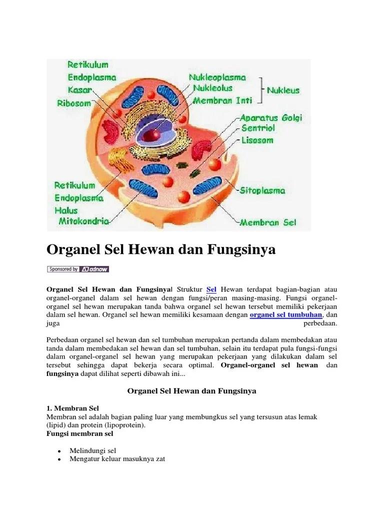 Fungsi Bagian Sel Hewan : fungsi, bagian, hewan, Organel, Hewan, Fungsinya.docx