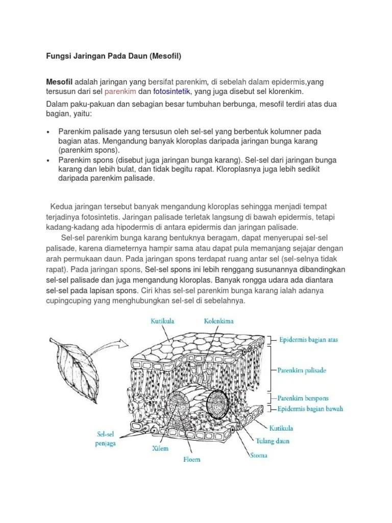 Fungsi Jaringan Spons : fungsi, jaringan, spons, IPA1.docx