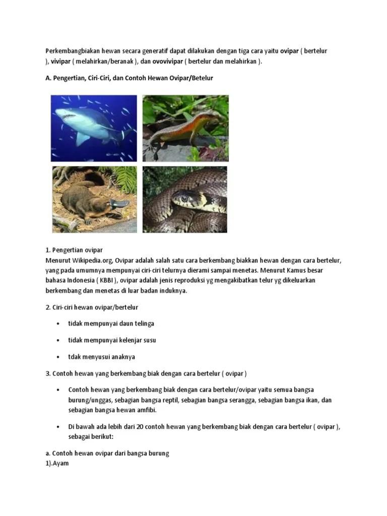Hewan Bertelur Dan Melahirkan : hewan, bertelur, melahirkan, Contoh, Hewan, Ovovipar, Lengkap, Tentang, Bimbingan, Konseling, Cute766