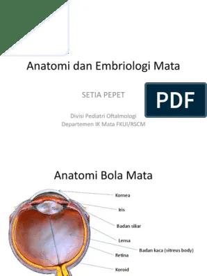 Anatomi Mata Pdf : anatomi, Anatomi, Embriologi, Facial, Features, Human, Anatomy