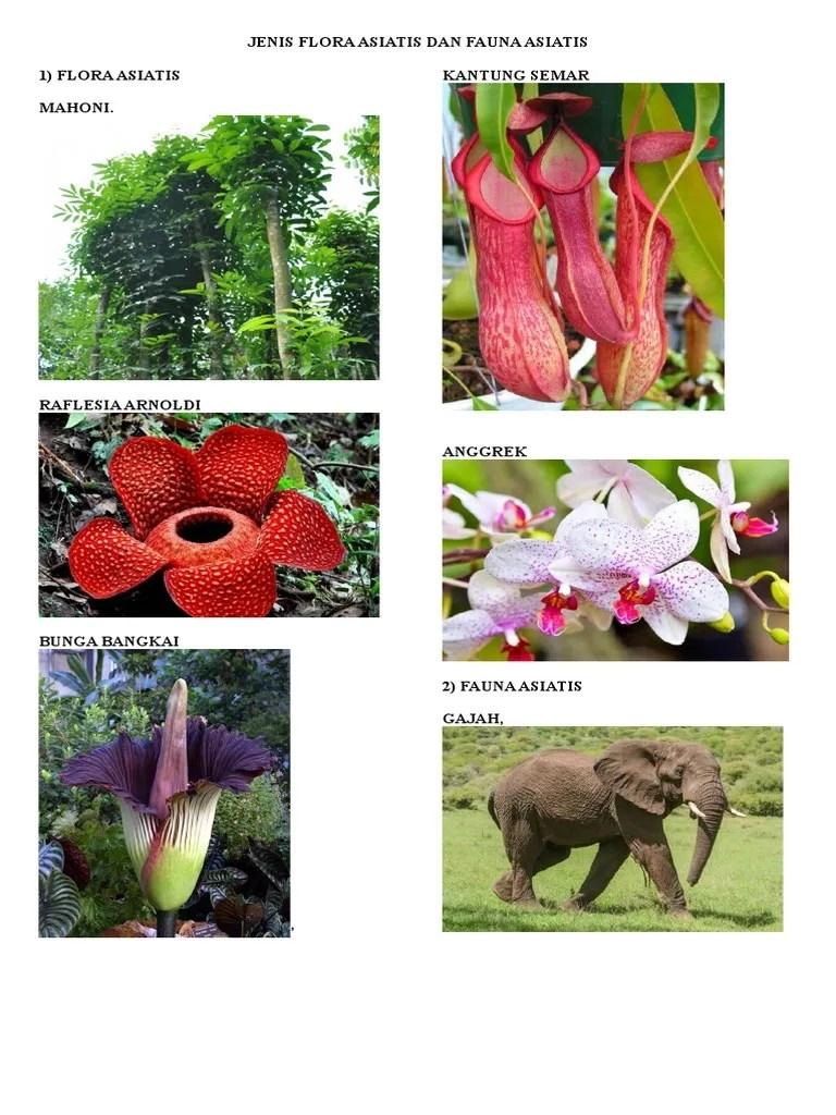 Flora Asiatis : flora, asiatis, Jenis, Flora, Asiatis, Fauna