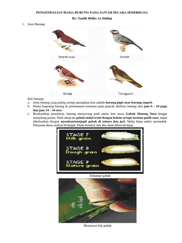 Cara Mengusir Burung Gereja : mengusir, burung, gereja, Pengendalian, Burung, Sawah, Secara, Sederhana
