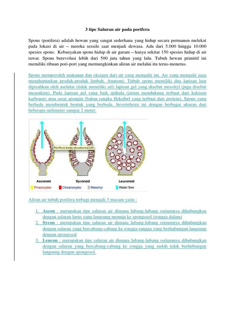Pengertian Porifera, Ciri-Ciri, Reproduksi dan Klasifikasi