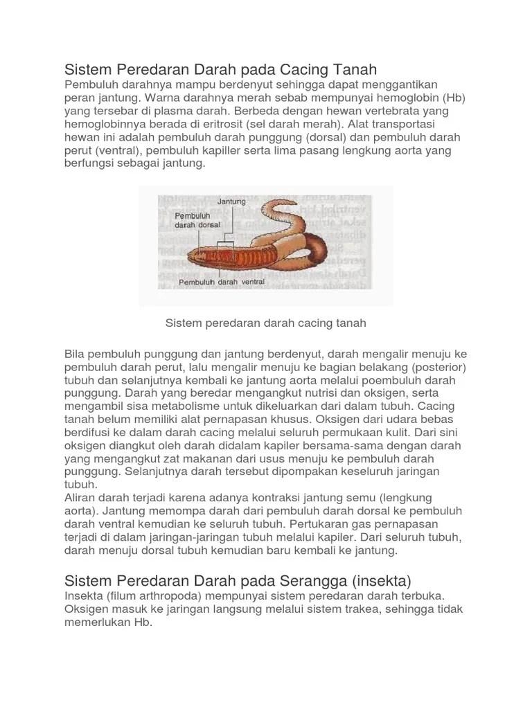 Sistem Peredaran Darah Pada Cacing : sistem, peredaran, darah, cacing, Sistem, Peredaran, Darah, Cacing, Tanah