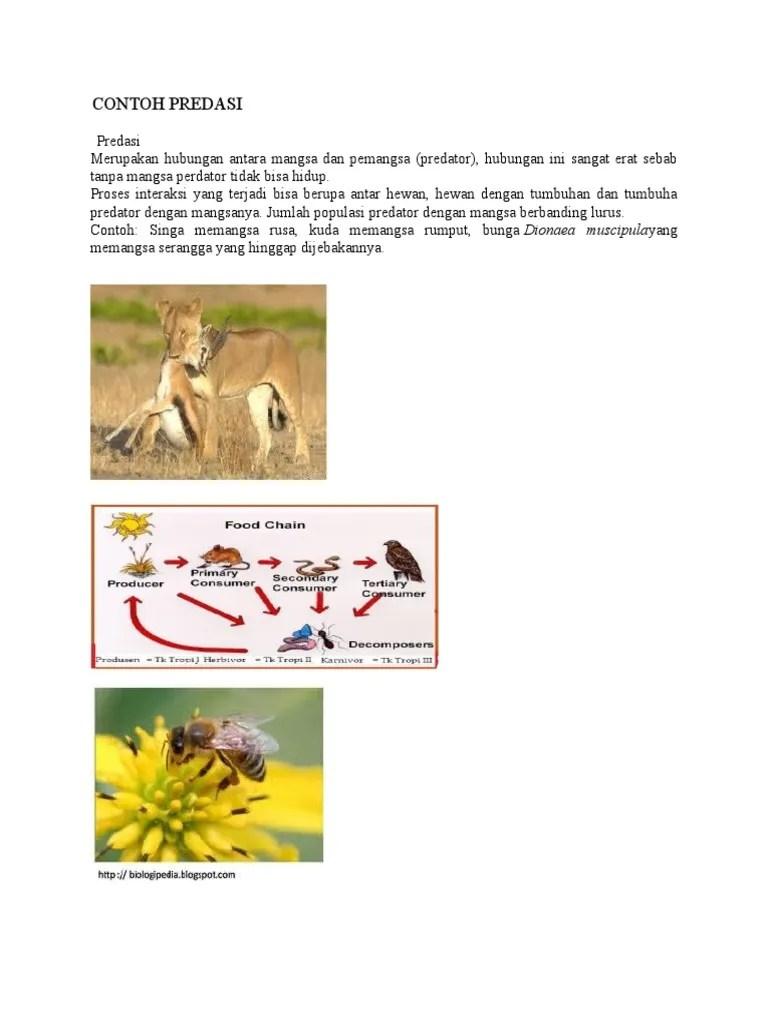 Gambar Predasi : gambar, predasi, 105370446-CONTOH-PREDASI.doc