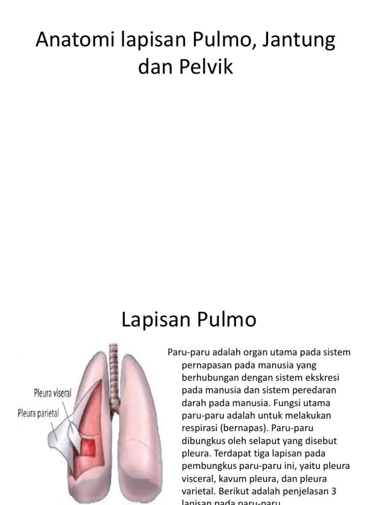 Pembungkus Paru Paru : pembungkus, Anatomi, Lapisan, Pulmo,, Jantung, Pelvik