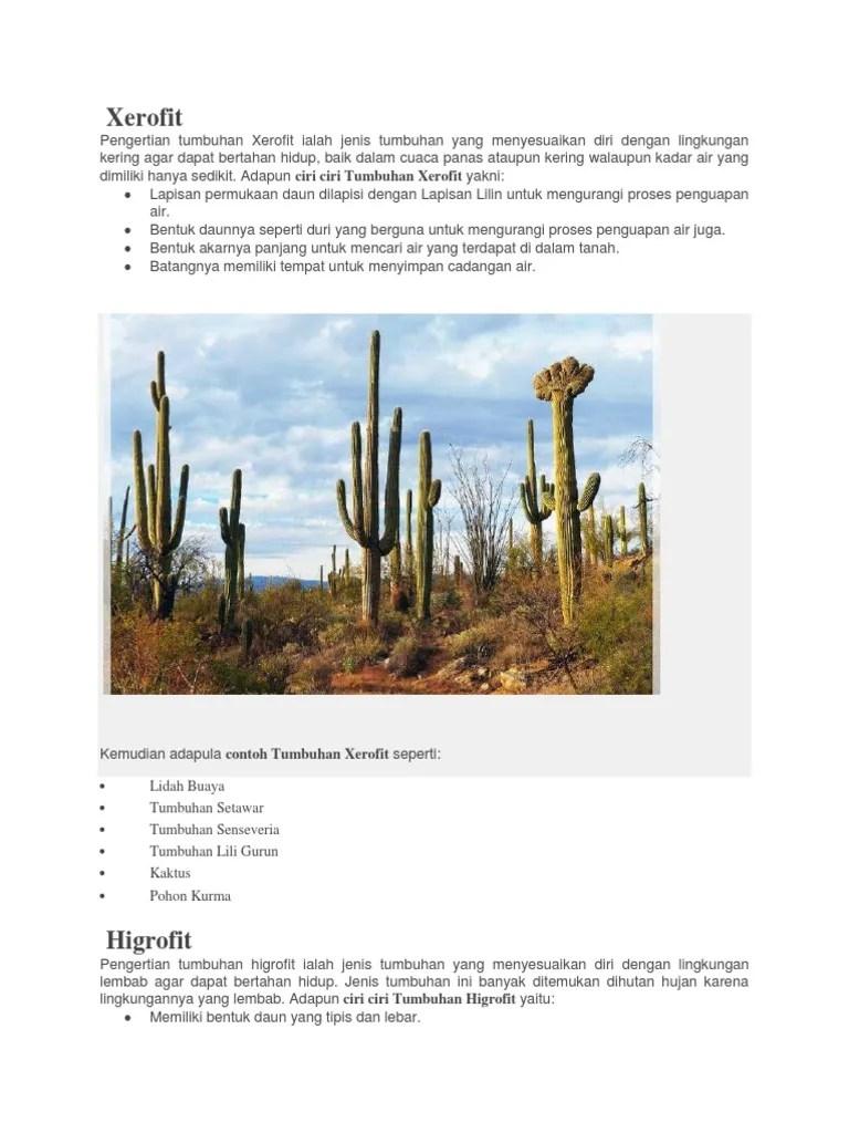 Contoh Tumbuhan Hidrofit : contoh, tumbuhan, hidrofit, Xerofit, Higrofit, Hidrofit