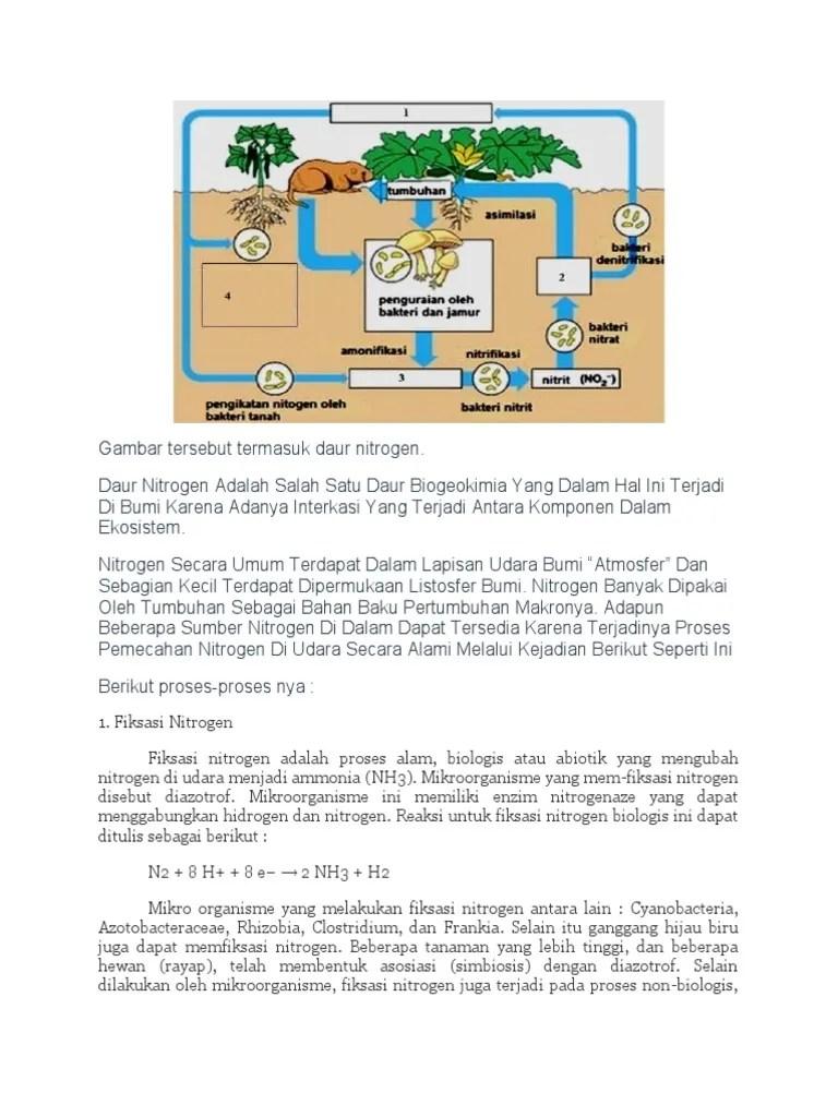 Daur Biogeokimia Nitrogen : biogeokimia, nitrogen, Nitrogen