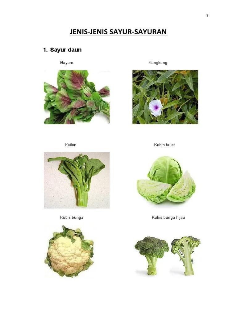Jenis Sayuran Daun : jenis, sayuran, Jenis-Jenis, Sayur-Sayuran