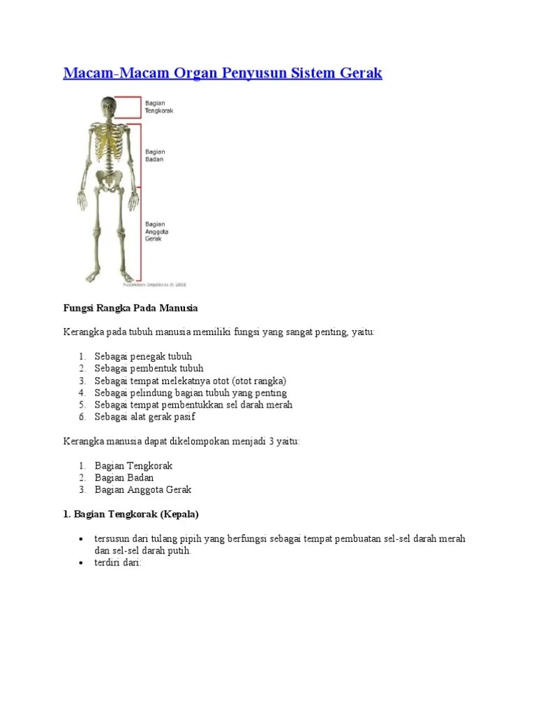 Organ Penyusun Sistem Gerak Pada Manusia : organ, penyusun, sistem, gerak, manusia, Macam-Macam, Organ, Penyusun, Sistem, Gerak:, Fungsi, Rangka, Manusia