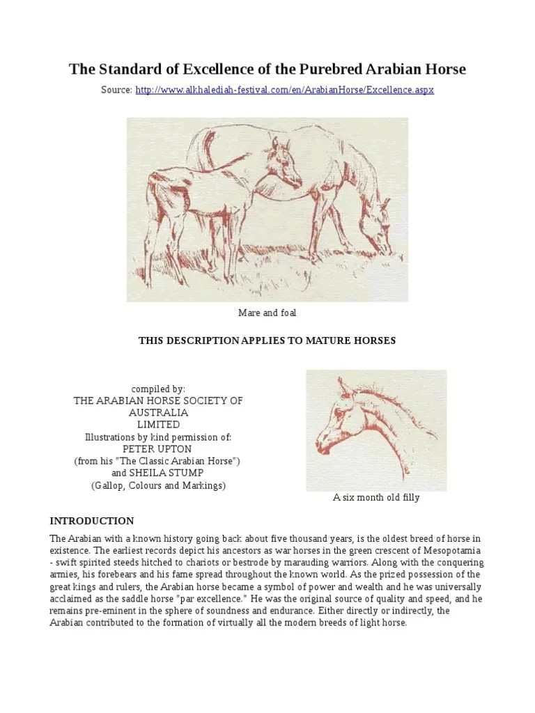 small resolution of the standard of excellence of the purebred arabian horse horse gait horses