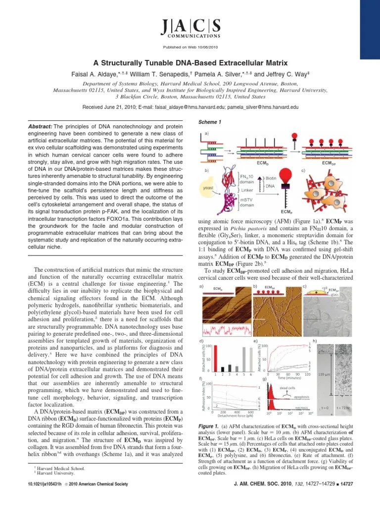 hight resolution of faisal a aldaye william t senapedis pamela a silver and jeffrey c way a structurally tunable dna based extracellular matrix extracellular matrix