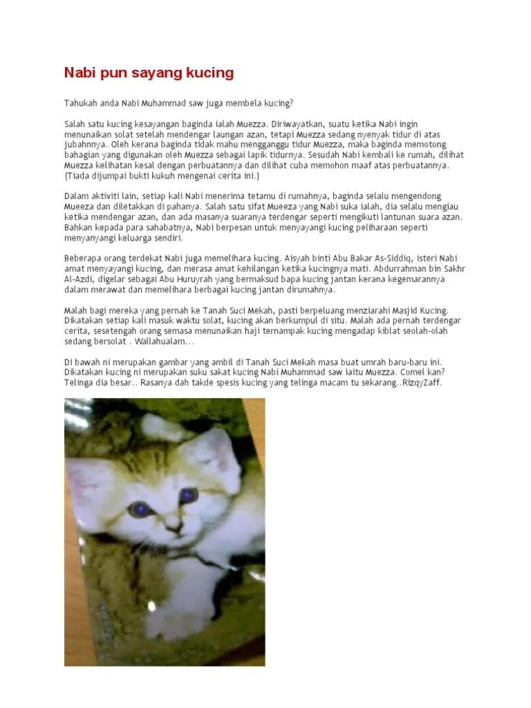 Kucing Dalam Al Quran : kucing, dalam, quran, Sayang, Kucing