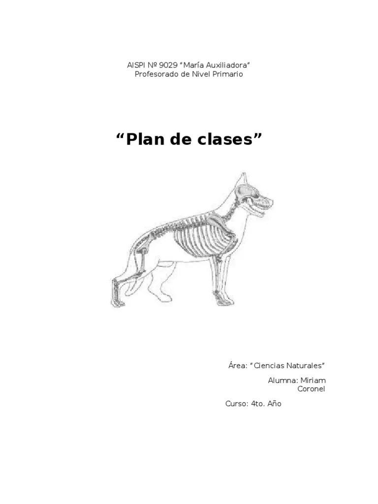 4º vertebrados-invertebrados planificacion