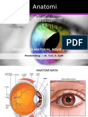 Anatomi Mata Pdf : anatomi, Anatomi:, Presentasi, Material, Review