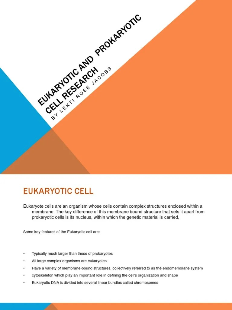 typical eukaryotic cell diagram [ 768 x 1024 Pixel ]