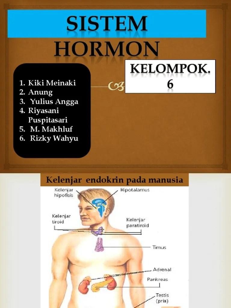 Gambar Hormon Pada Manusia : gambar, hormon, manusia, Sistem, Hormon