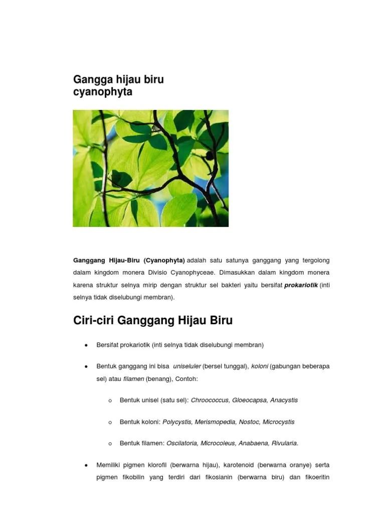 Klasifikasi Alga : Pengertian, Ciri, Reproduksi & Habitatnya