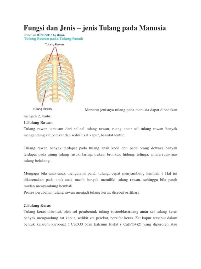 Proses Perubahan Tulang Rawan Menjadi Tulang Keras : proses, perubahan, tulang, rawan, menjadi, keras, Fungsi, Jenis, Tulng