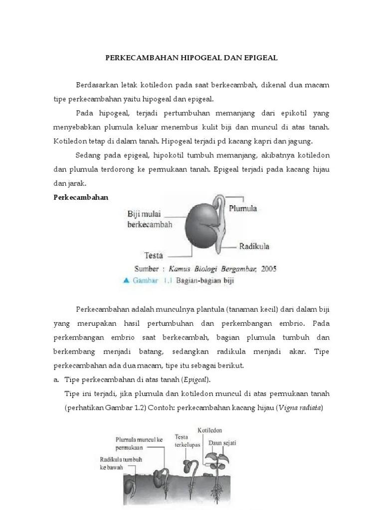 Contoh Perkecambahan Epigeal : contoh, perkecambahan, epigeal, Perkecambahan, Hipogeal, Epigeal