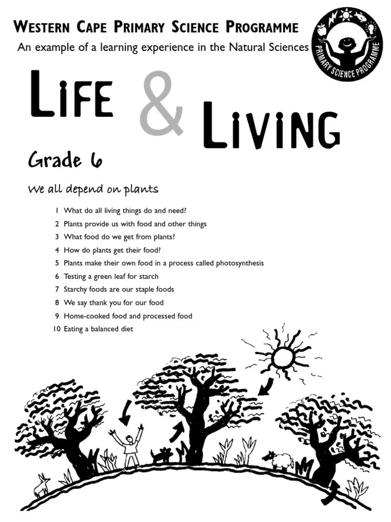 hight resolution of Life and Living Grade 6 English   Staple Foods   Photosynthesis
