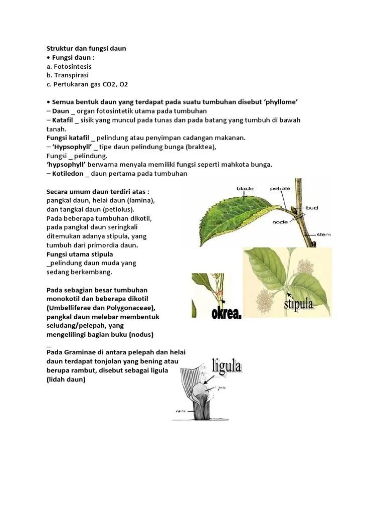 Fungsi Daun Tumbuhan : fungsi, tumbuhan, Struktur, Fungsi, Daun.docx