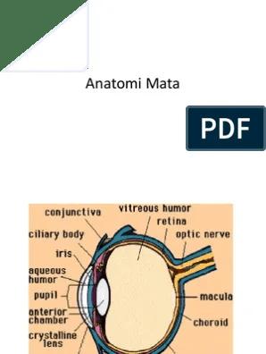 Anatomi Mata Pdf : anatomi, Anatomi, Mata.pptx