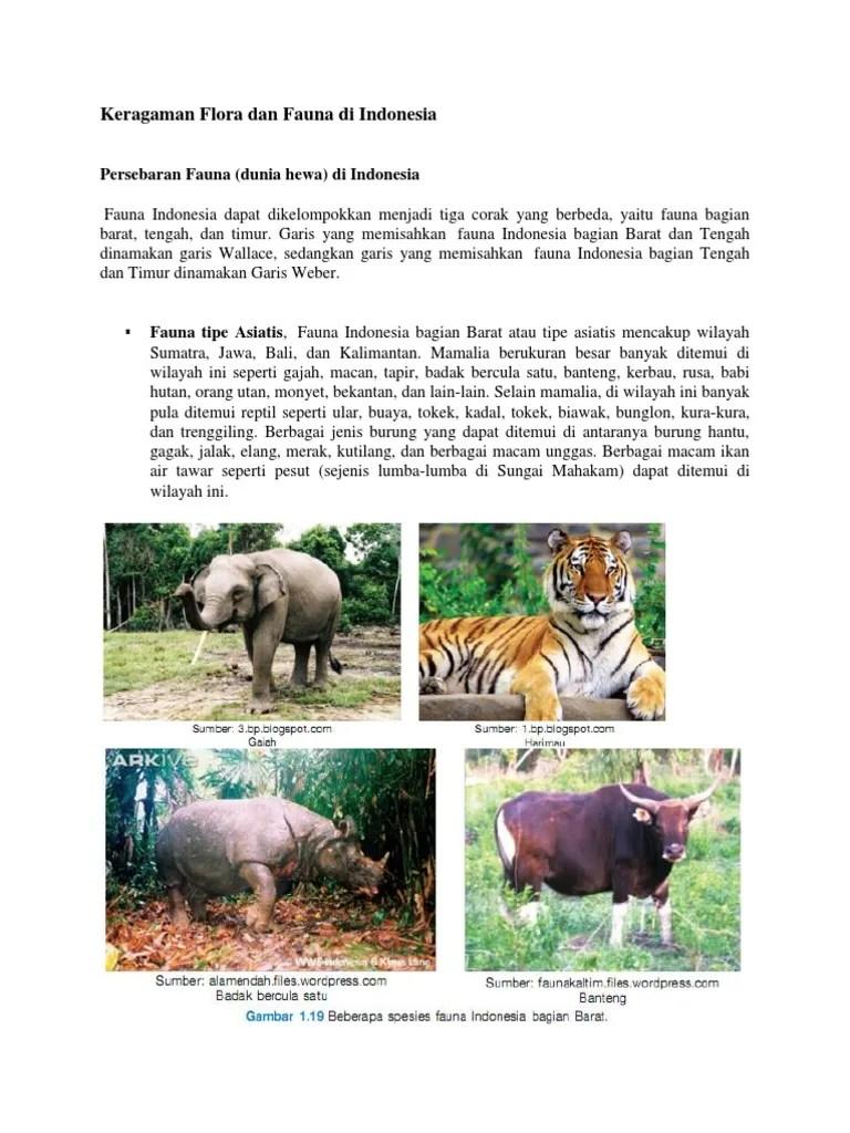 Fauna Bagian Barat Dan Penjelasannya : fauna, bagian, barat, penjelasannya, Gambar, Flora, Fauna, Indonesia, Bagian, Barat, Pixabay