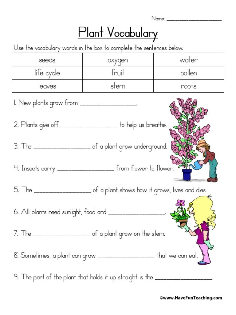 hight resolution of Plant Vocabulary: seeds oxygen water life cycle fruit pollen leaves stem  roots