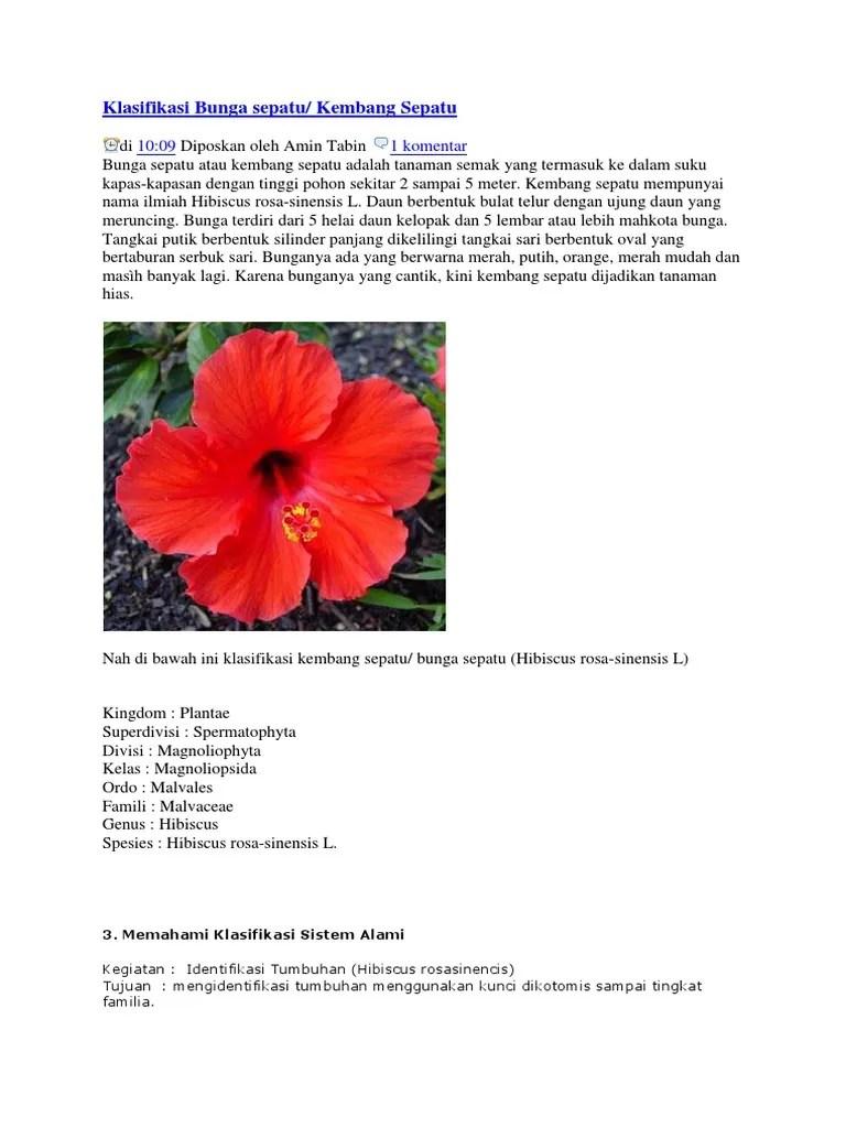 Kembang Sepatu Dan Kupu Kupu : kembang, sepatu, Klasifikasi, Bunga, Sepatu