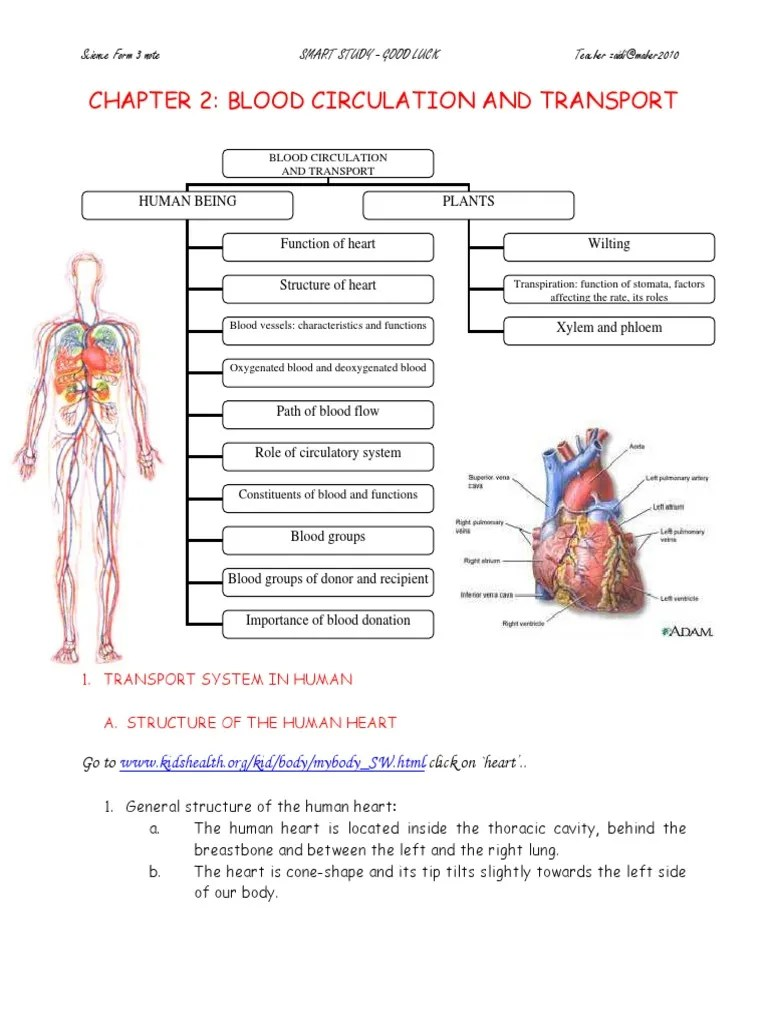 hight resolution of circulation diagram of organ and body
