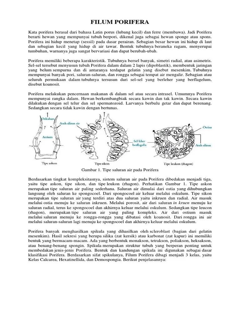 Saluran Air Pada Porifera : saluran, porifera, Filum, Porifera
