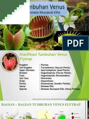 Tumbuhan Venus : tumbuhan, venus, Presentasi, Tumbuhan, Venus