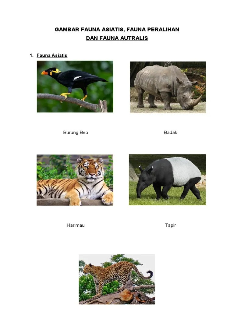Ciri Ciri Fauna Asiatis Dan Australis : fauna, asiatis, australis, Gambar, Fauna, Asiatis, Gambar)