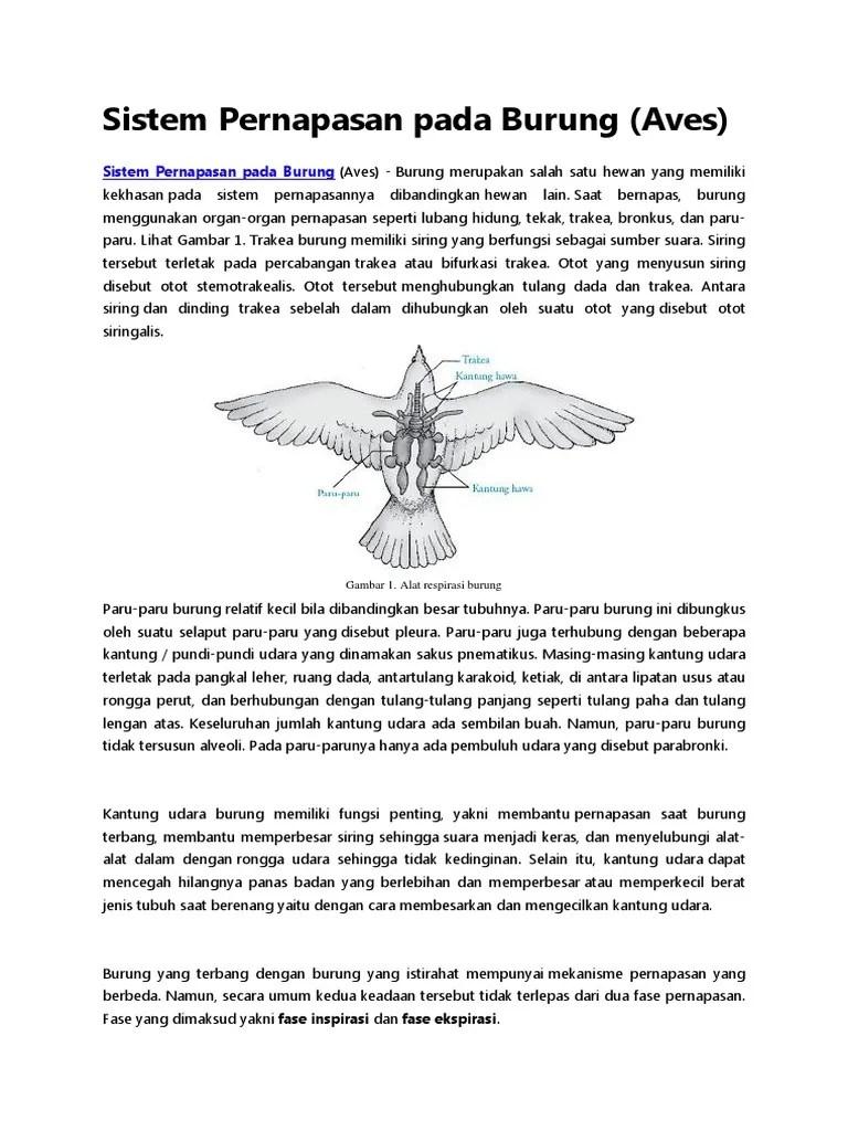 Sistem Pernapasan Pada Burung : sistem, pernapasan, burung, Sistem, Pernapasan, Burung