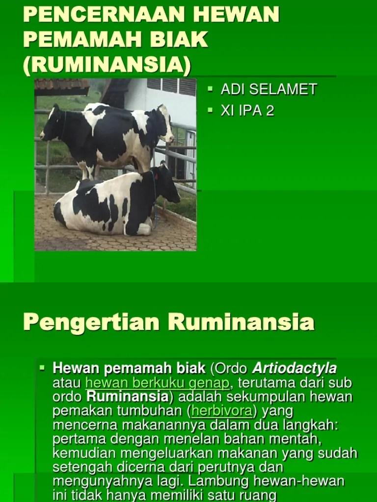 Hewan Pemamah Biak : hewan, pemamah, Pencernaan, Hewan, Pemamah, (Ruminansia)