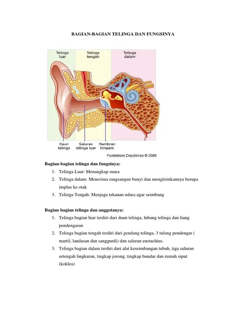 Bagian Telinga Untuk Keseimbangan : bagian, telinga, untuk, keseimbangan, BAGIAN-BAGIAN, TELINGA, FUNGSINYA.docx