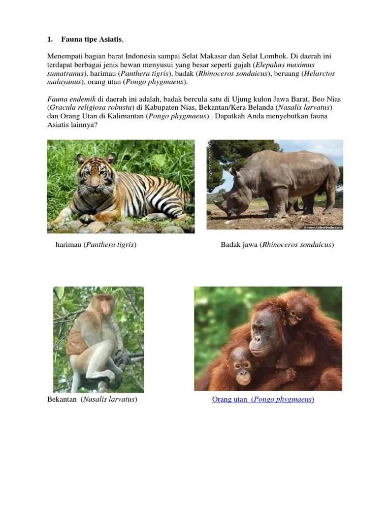 Gajah termasuk fauna tipe, gajah (elephas maximus