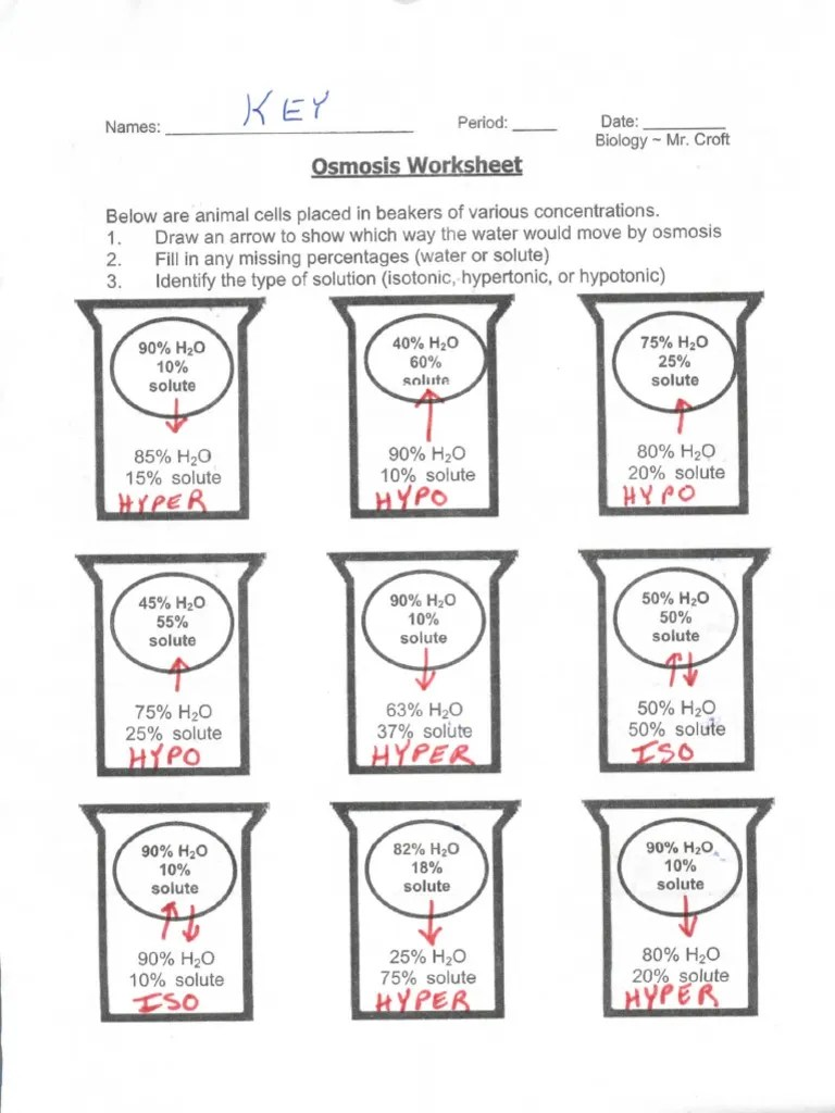 Diffusion And Osmosis Problems Answer Key : diffusion, osmosis, problems, answer, Osmosis, Beaker, Biology
