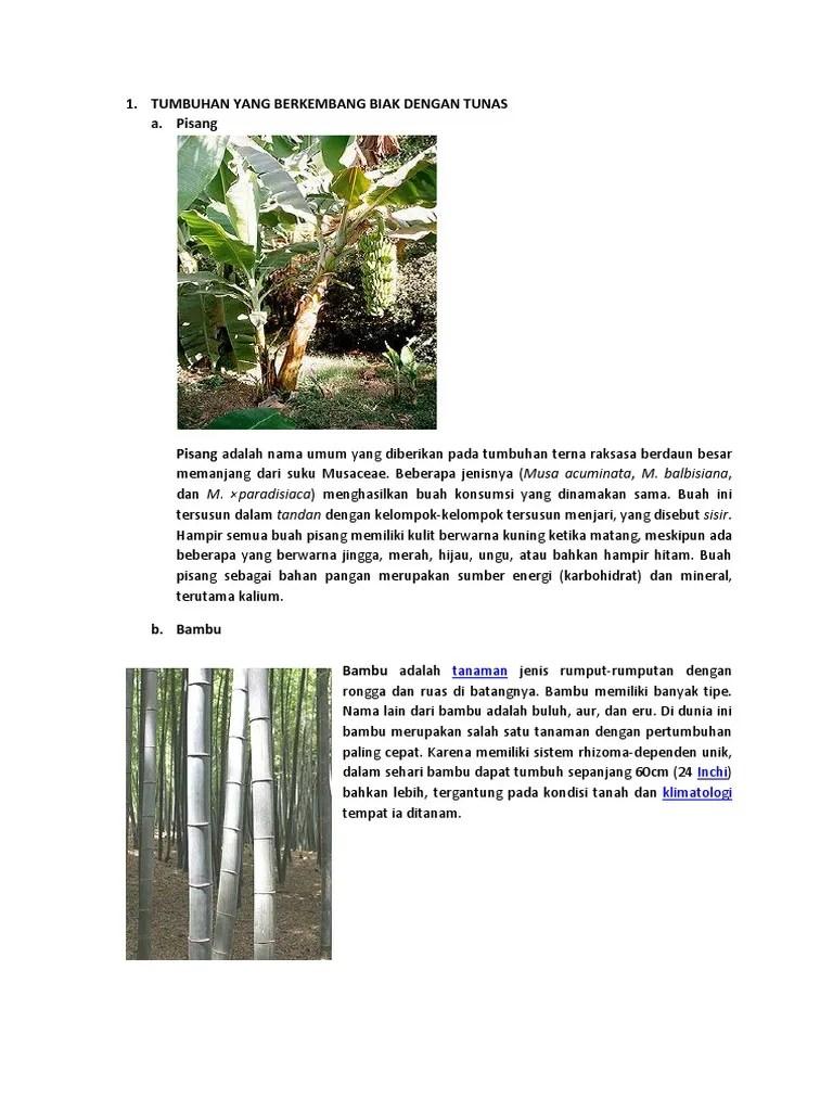 Tanaman Yang Berkembang Biak Dengan Tunas : tanaman, berkembang, dengan, tunas, TUMBUHAN, BERKEMBANG, DENGAN, TUNAS.docx