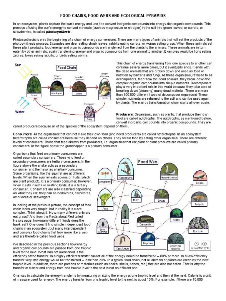 ecological-pyramids-worksheet   Food Web   Ecosystem [ 1024 x 768 Pixel ]