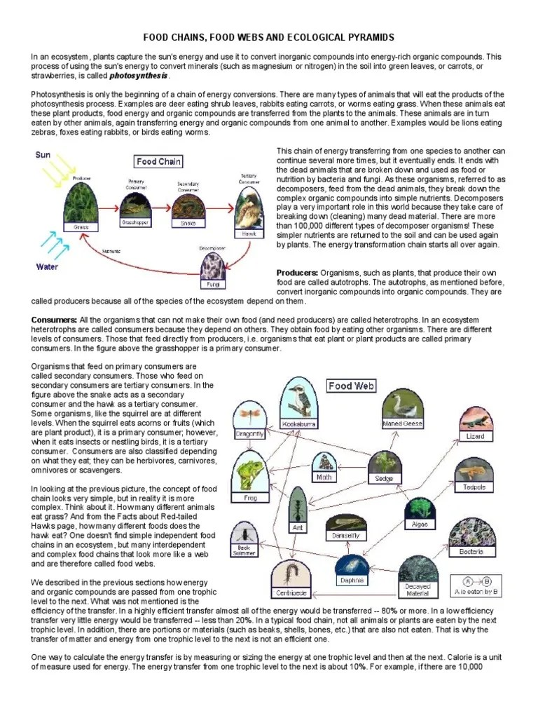 hight resolution of ecological-pyramids-worksheet   Food Web   Ecosystem