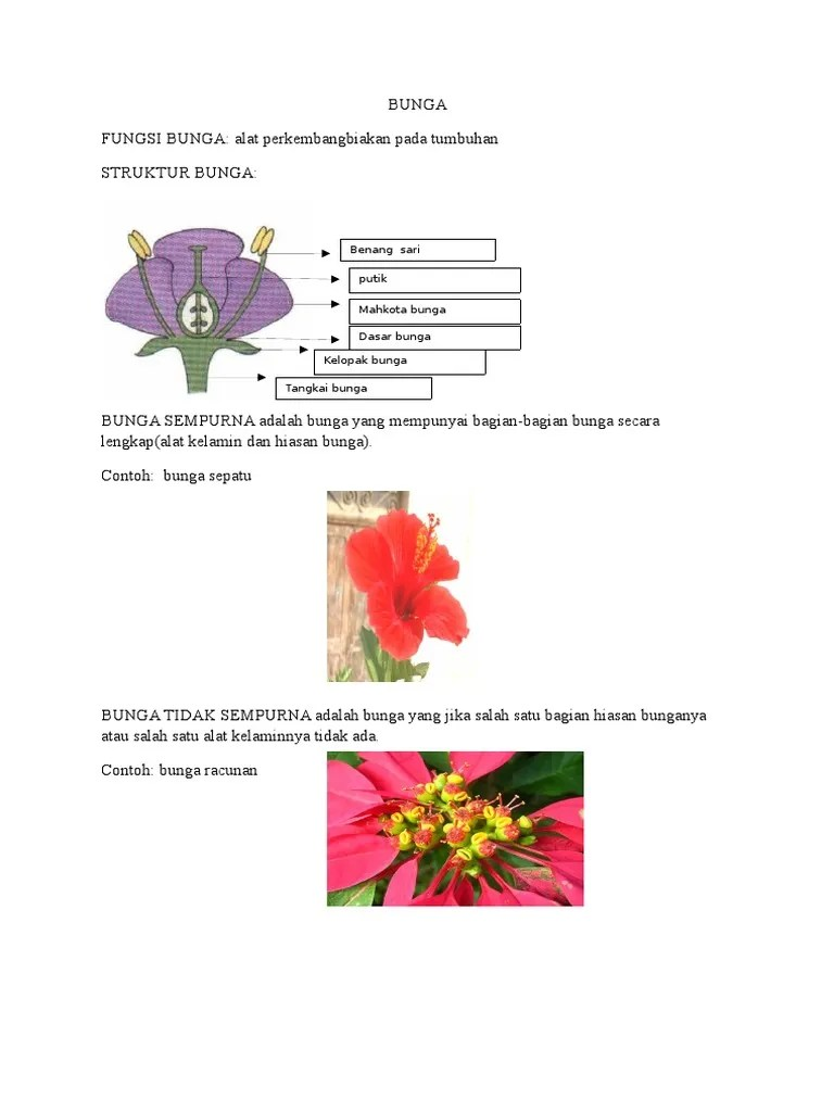 Struktur Bagian Bunga : struktur, bagian, bunga, FUNGSI, BUNGA:, Perkembangbiakan, Tumbuhan