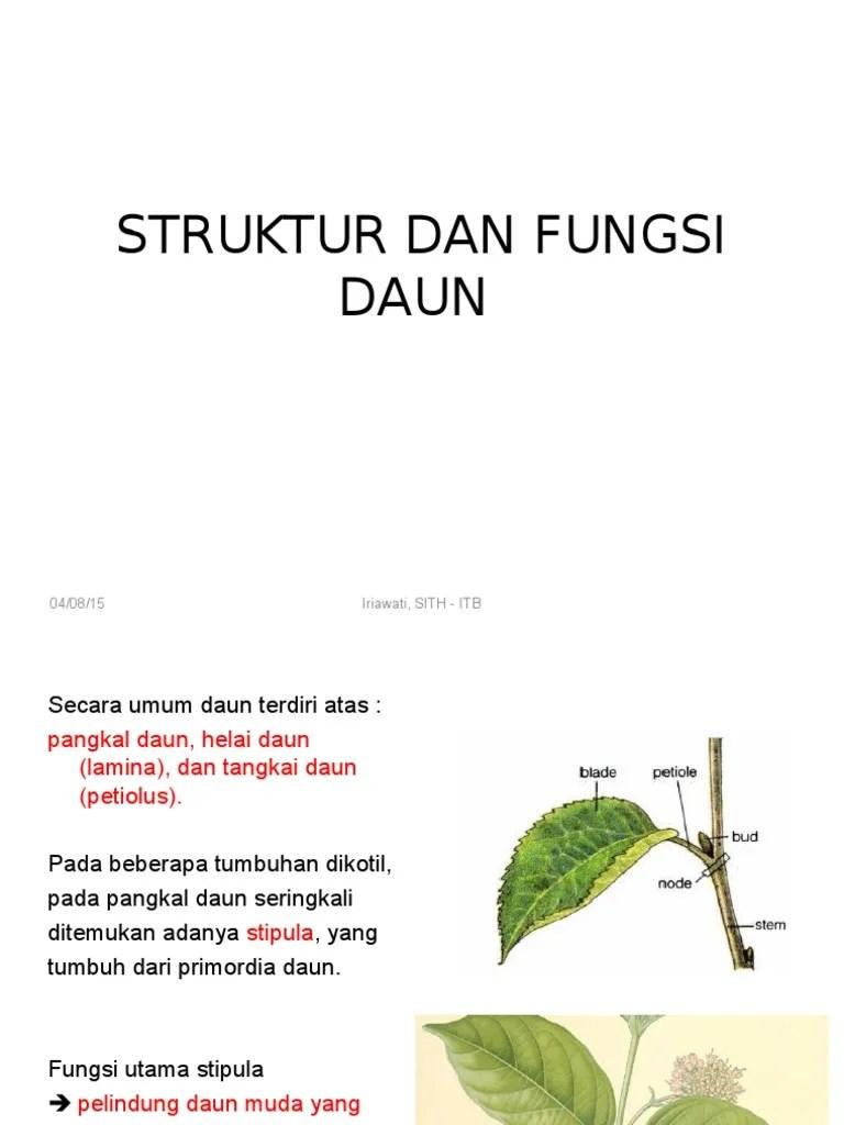 Fungsi Daun Tumbuhan : fungsi, tumbuhan