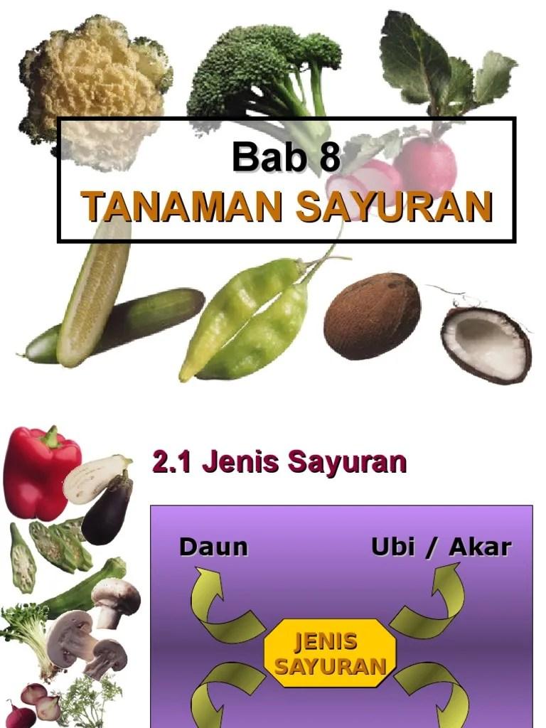 Contoh Sayuran Akar : contoh, sayuran, Tanaman, Sayuran