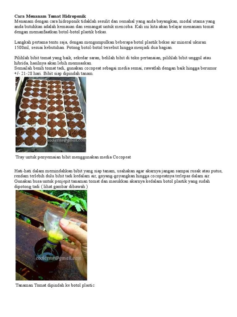 Cara Menanam Tomat Hidroponik : menanam, tomat, hidroponik, Menanam, Tomat, Hidroponik