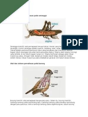 Sistem Pernapasan Pada Burung : sistem, pernapasan, burung, Sistem, Pernafasan, Serangga