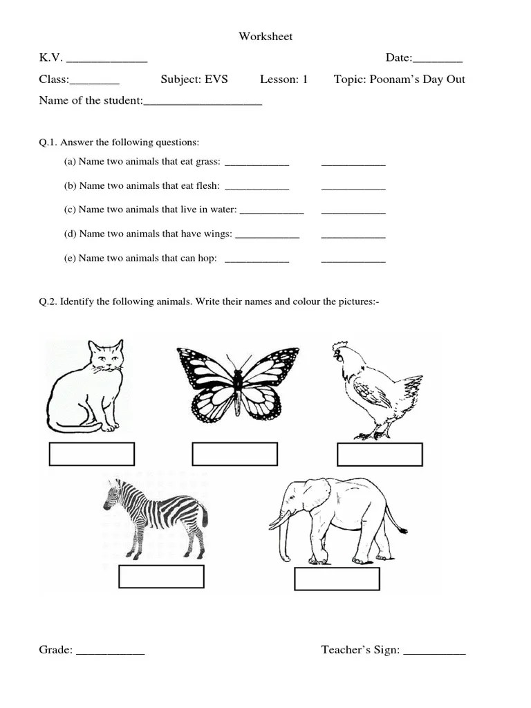 also worksheets evs class lesson plants nature rh scribd